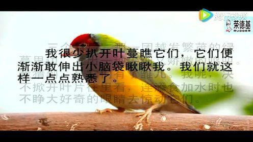 冀教版五年级语文上册2 珍珠鸟