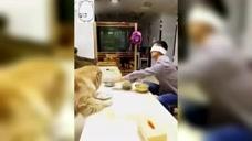 盲人小伙养了10年的金毛,它的行动把所有人都看