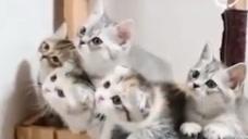 主人太坏了吧,居然这样戏弄五只小奶猫,小奶