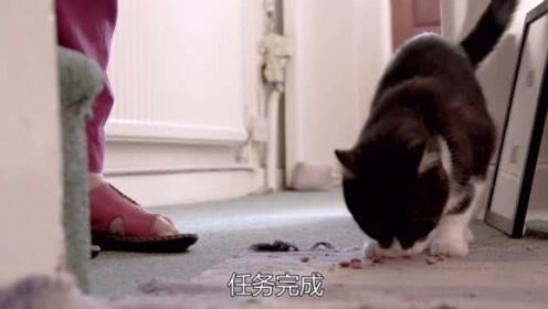 野生萌宠:猫咪来拜访老太太,得到猫粮!