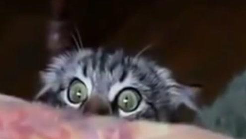 当动物看恐怖片时,会发生什么搞笑的事情呢?