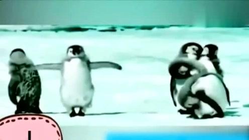 搞笑动物剪辑,看到最后,笑到最后,动物界的