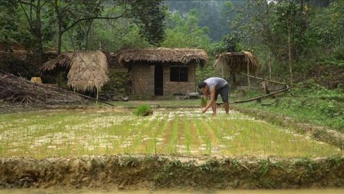 外国牛人野外生存,自己种地造家!