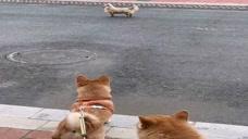 这只狗太欠了,太能嘚瑟了,看到结局我笑了!