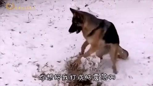 宅家恶搞:传说中的电子狗,狗狗神配音