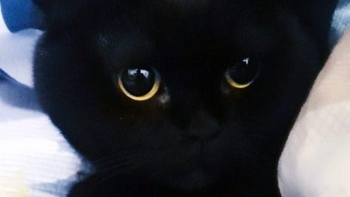 养了一个像毛绒玩具的猫,我真无奈!