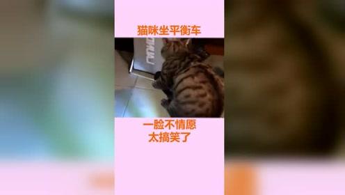 猫咪坐平衡车,一脸不情愿太搞笑了