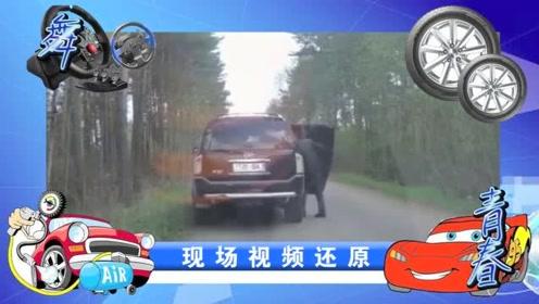 路怒症:越野男强行超车,还别停视频车,上前叫嚣,结果亮了!