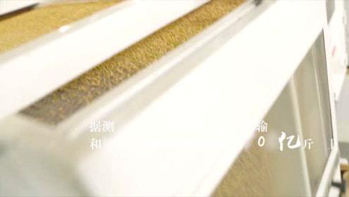 上海市2020年世界粮食日宣传视频