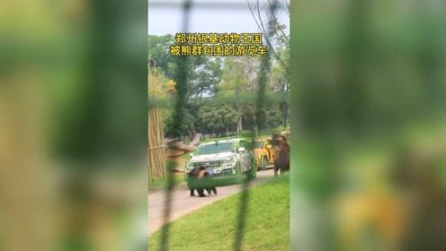 郑州银基动物王国,游览车行驶中被熊群围住,