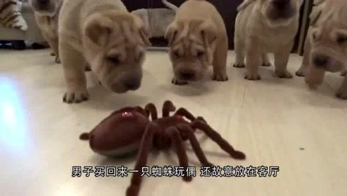 搞笑动物:给狗狗买了这个碗,结果差点把狗狗