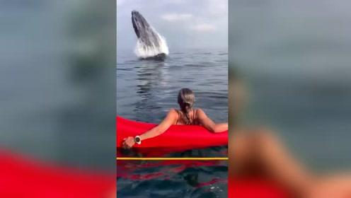 当一群人出海游玩时,突然出现了一头鲸鱼!