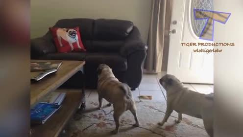 搞笑 爆笑动物5