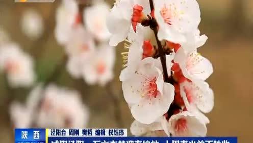 苏教版四年级语文下册2 第一朵杏花