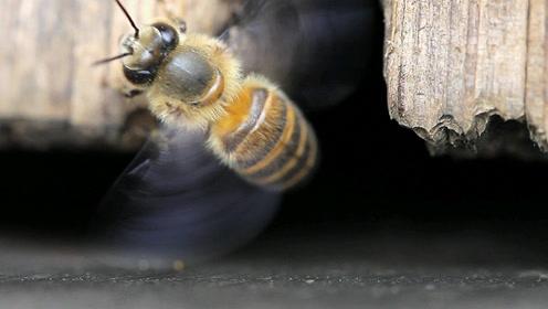 三年级语文下册14 蜜蜂