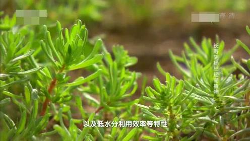 教科版一年级科学上册第1单元 植物1.我们知道的植物