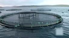 设得兰群岛的物资全靠外来补给,多亏货轮劈波斩浪及时送达!