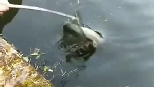钓鱼高手遇到抄鱼高手了,一条大鱼轻松捞起来