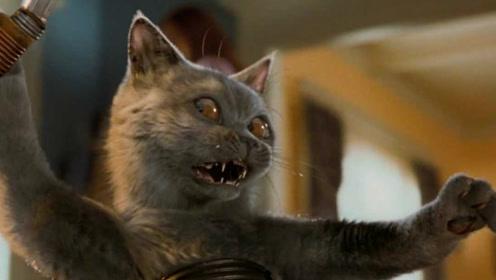 小猫咪表面上是小宠物,实际上是一个特工杀手