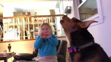 宠物们不仅可爱还很搞怪呢,遇上这些奇葩的宠物们,你会咋办?