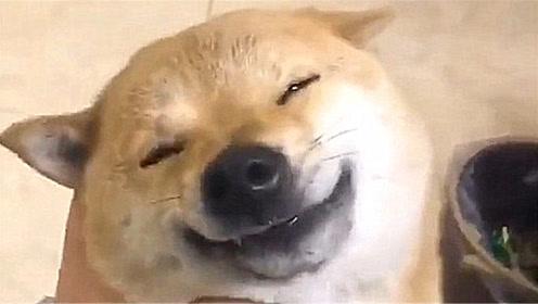 狗狗和主人相互按摩,这狗子的表情,也太搞笑