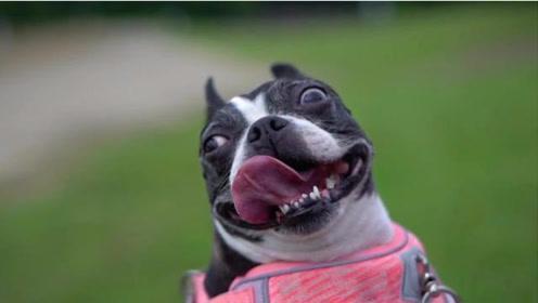 美女为了拍摄爱狗,买了1台索尼a7m3,测试视频感觉怪怪的……