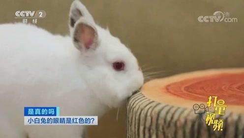所有白兔的眼睛都是无色的吗?专家在线解答,快来看看