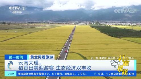 稻田成为旅游打卡地!大理这处田园,每年吸引无数游客