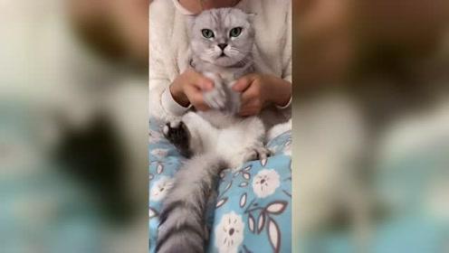 猫猫:此视频热门,我跳的螃蟹舞你们喜欢吗?
