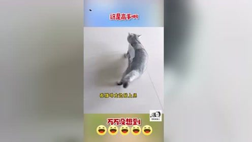 早期人类驯服野生猫咪的珍贵视频!~