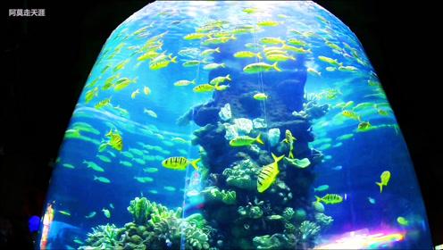 惠游湖北,实拍梦幻水母馆,各种可爱又美丽的