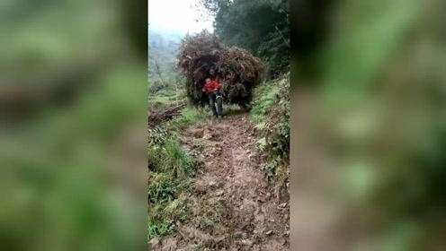 农村女人的心酸,为了生活肩上背再多柴,也要带上孩子
