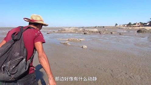 旅游岛渔民少海货昂贵,小伙去赶海被坑底猛货攻击,这阵仗真吓人