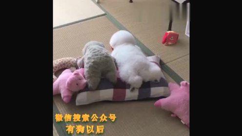 假装自己是个玩具的狗狗,萌死了!