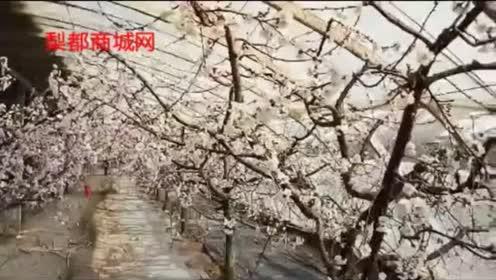 鄂教版三年级语文下册16 第一朵杏花