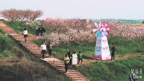 """万田乡""""女儿节""""新过法,为乡村美颜,为农民增收"""