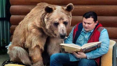 战斗民族的宠物竟然是熊?