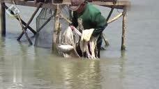 水中好多木架子,不是钓鱼用的,都是撒网台