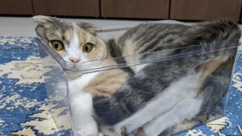 壁纸 动物 猫 猫咪 小猫 桌面 496_280
