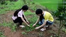 农村姐妹花挖的啥野菜?在城里一斤卖到十几块,你们家乡有吗?