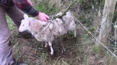 世界上最危险的植物:能吃下一只羊,一旦发现就会被立马烧毁!
