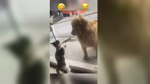 搞笑配音搞笑视频宠物成精啦沙雕我要上热门
