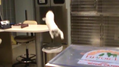 猫咪跳跃失误镜头集锦,原谅我不厚道的笑了