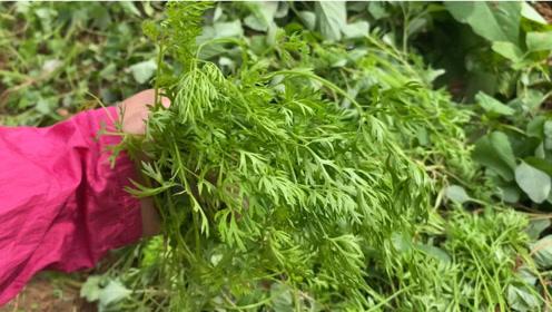 胡萝卜叶别再扔了,拌点面粉,简单一蒸,清新好吃,营养又健康