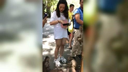 美女给猴子喂吃的,其中一只小猴子直接上去抱大腿了,太搞笑了