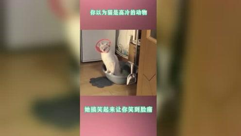 你以为猫是高冷的动物,它搞笑起来,让你笑到