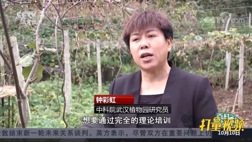 """贵州院坝村:""""小科技果""""种出""""大文章"""",奔向致富路"""