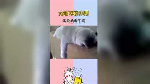 搞笑视频:论猫咪的作用,这些猫咪是成精了吗?