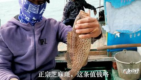湛江这个地方海钓资源真好,一根手线狂抽30斤鱼,这个石斑很值钱