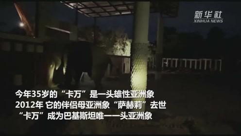 """""""世界上最孤独的大象""""抵达柬埔寨 正式开启""""退休""""生活"""
